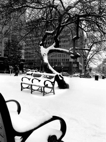 Tree___bench