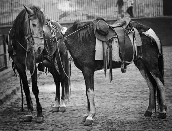 Headless_horse