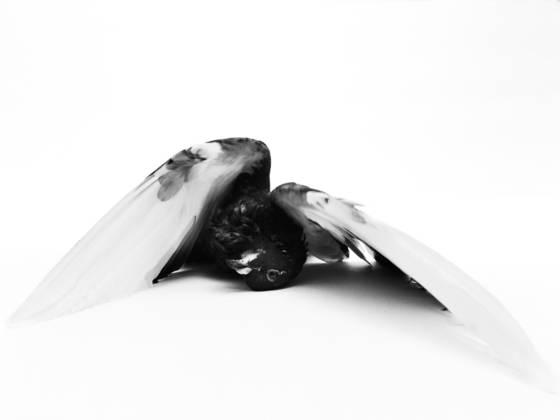 Fallen_angel