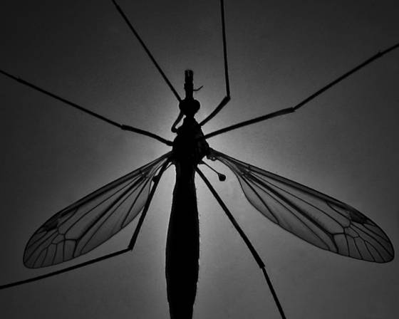 Bug_off