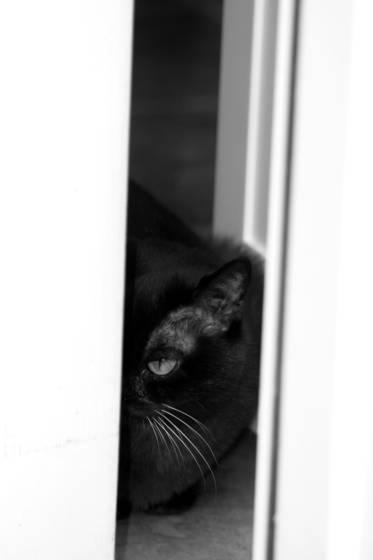 Sidney_hiding