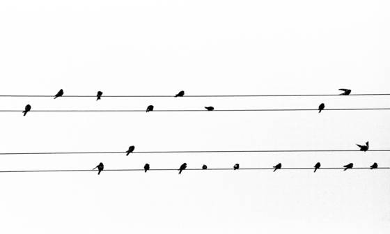 Birds on wires   musical notes