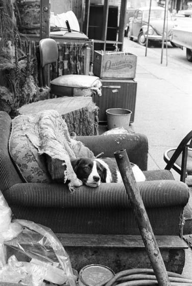 Dog_on_armchair