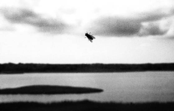 Fly_on_window