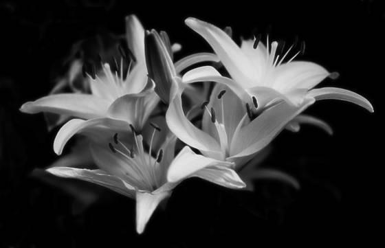 Biltmore_flowers