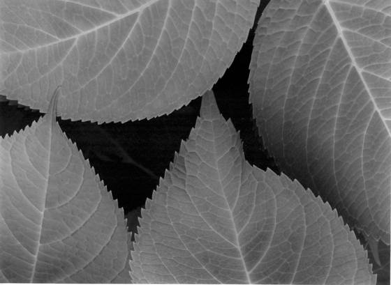 Leaf_abstract