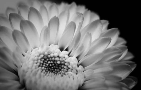 Natural_simplicity
