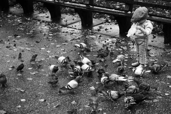 Feeding the birds after the rain