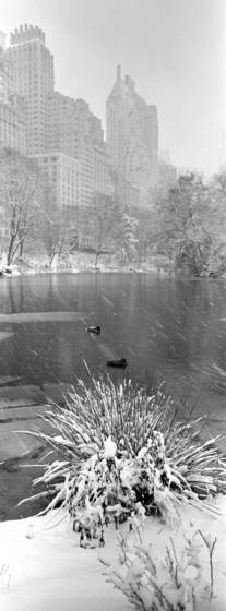 Snowfall_in_central_park