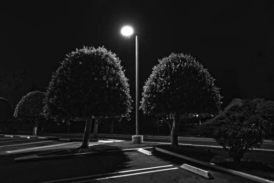 Manicured_trees