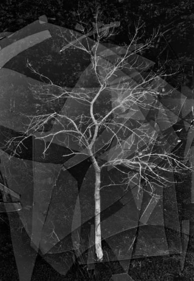 Broken_fractal