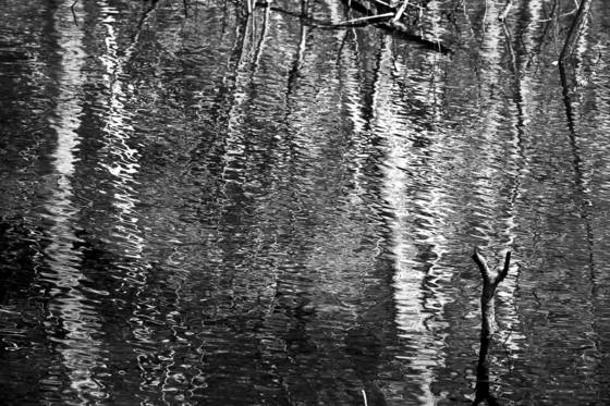 Forest_reflections