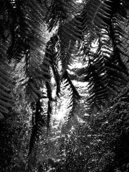Fern_in_waterfall