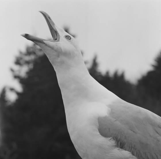 Gull_talk
