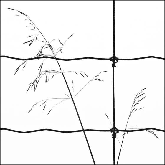 Winter_lines