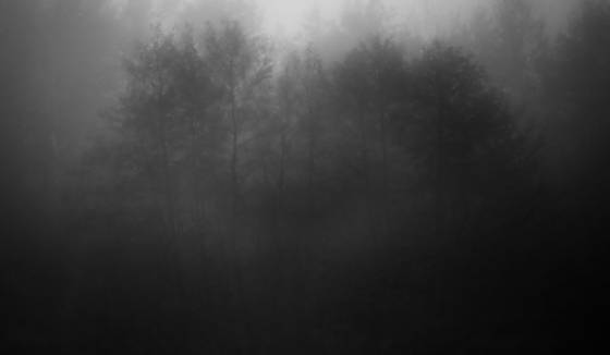 Trees_in_the_fog