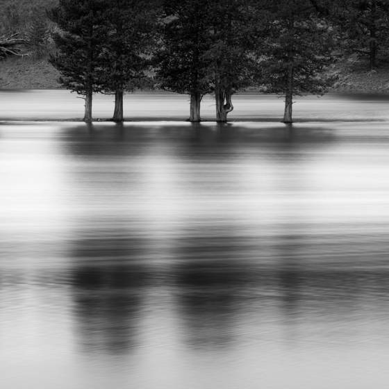 Five_trees