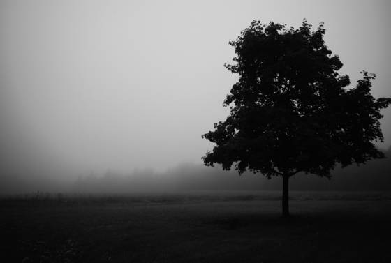 Morning_fog