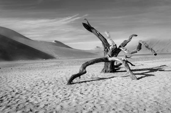 Desert_sculpture