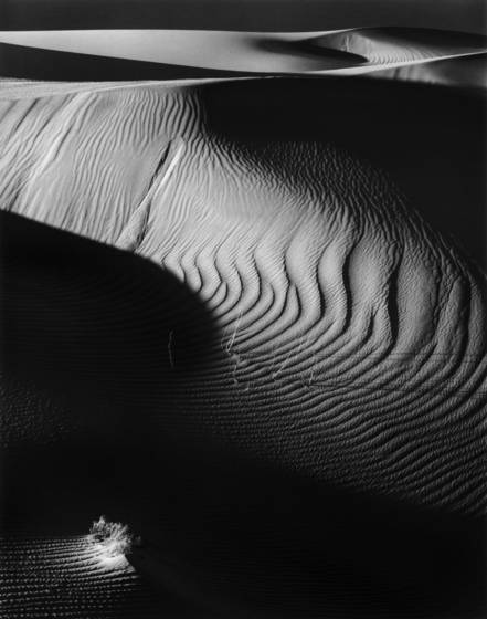 Shadows_in_the_sand