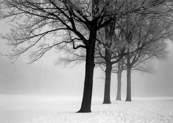 Trees and ice fog