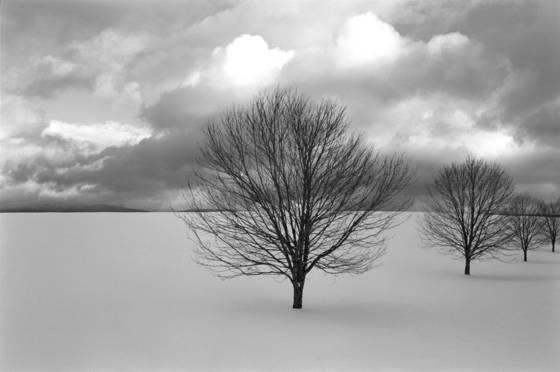 Triple_trees
