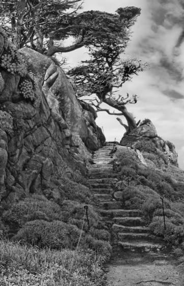 Point lobos steps