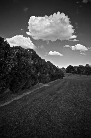 Chestnut_ridge_juniper_series__4