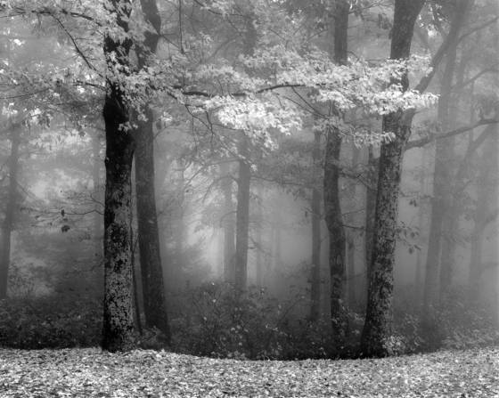 Forest_in_fog