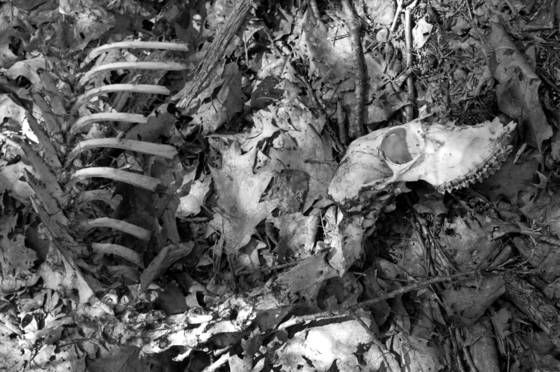 Remains_2