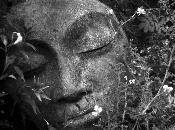 Garden_face
