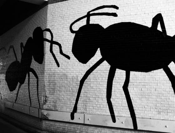 Alley_ants