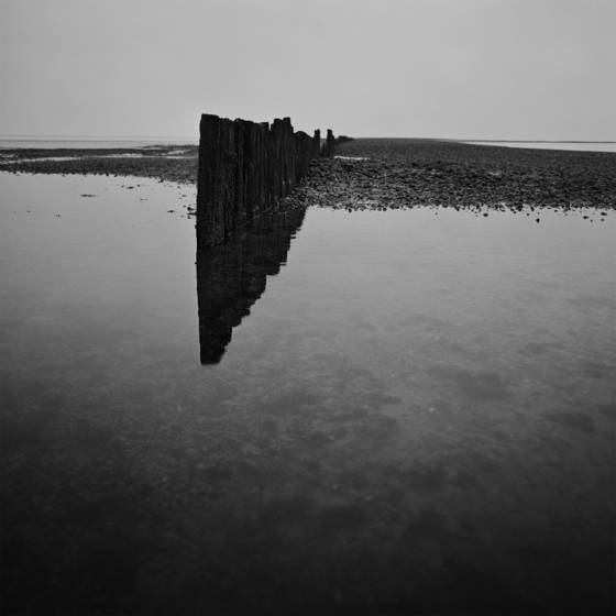 Morecambe_bay_study_i