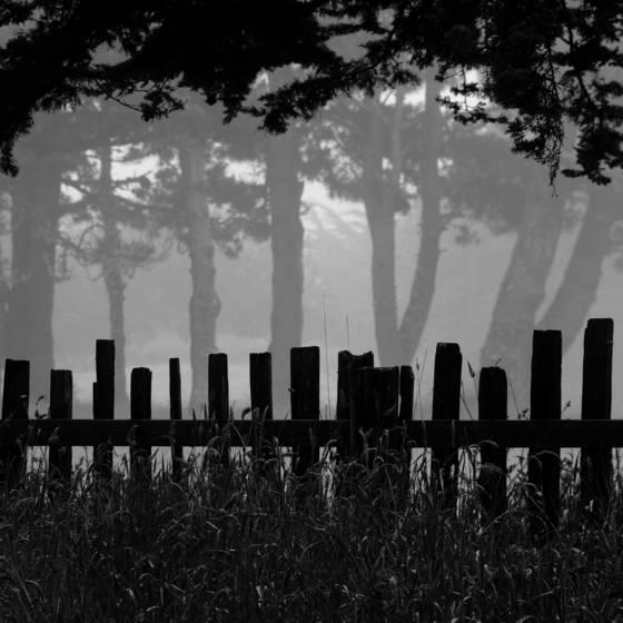 Fog_lines