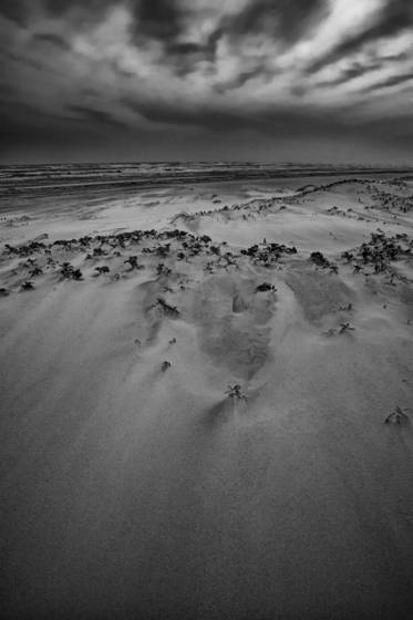 Wind_swept_beach