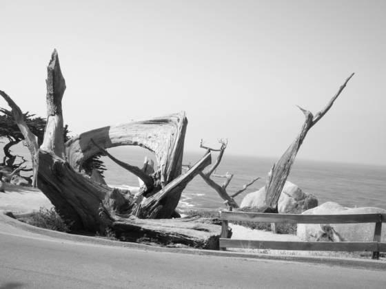 Driftwood_art_at_sea