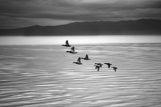 Eight_ducks_lake_tahoe