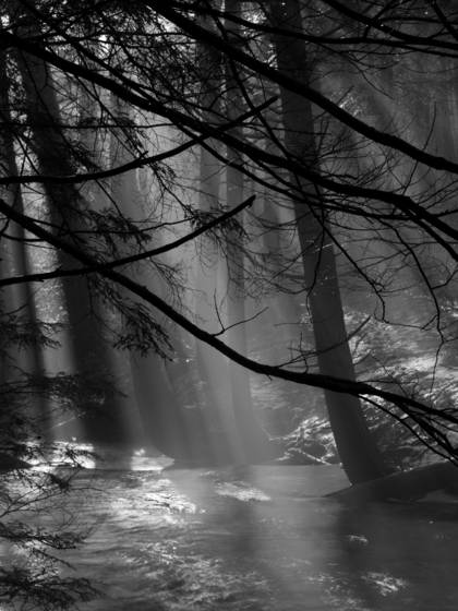 Winter_mist