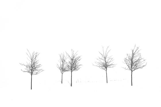 Line_of_trees