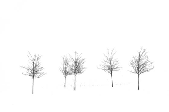 Line_of_trees