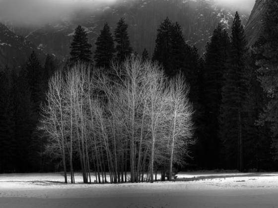 Ahwahnee_meadow