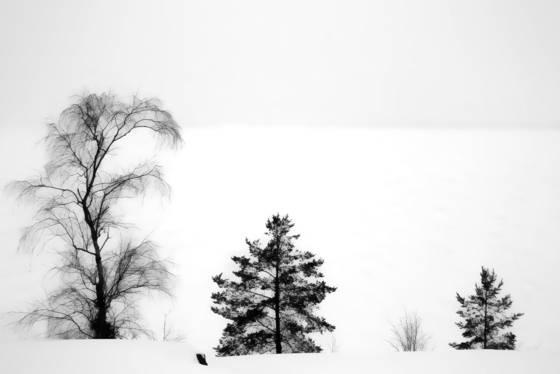 Tree_some
