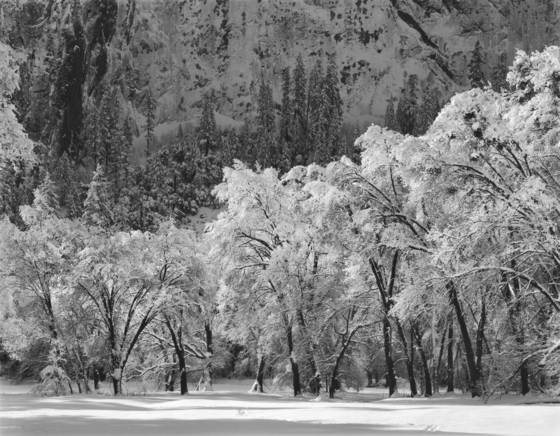 El capitan meadow in winter