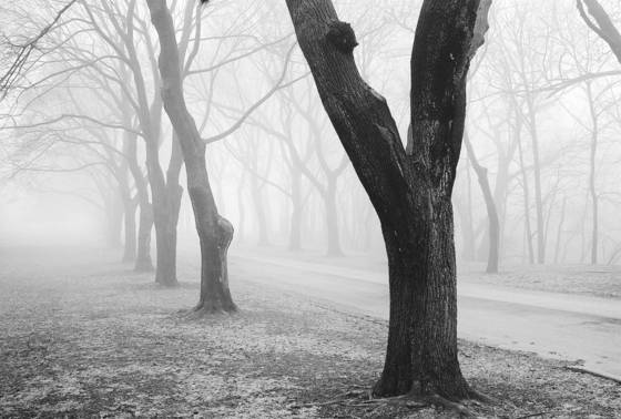 Fog_8
