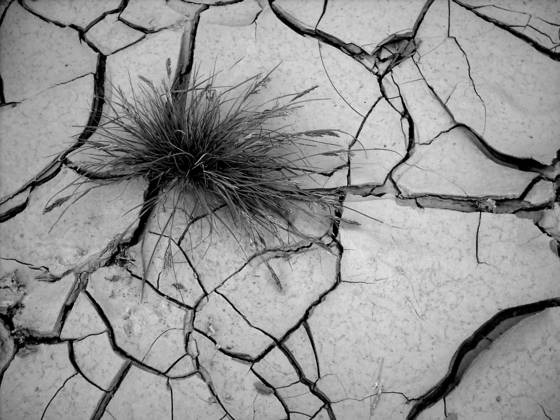 Cracked_earth
