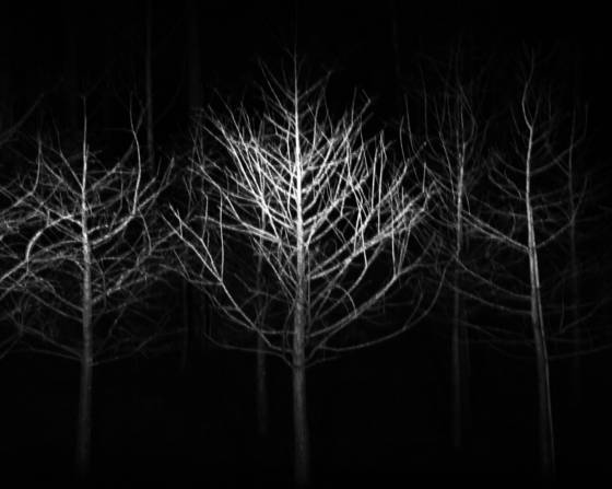 Ghost_trees