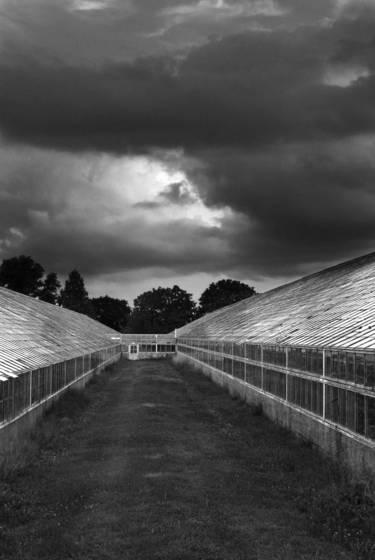 Greenhouse_5
