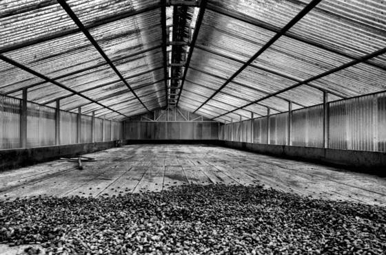 Cocoa bean drying