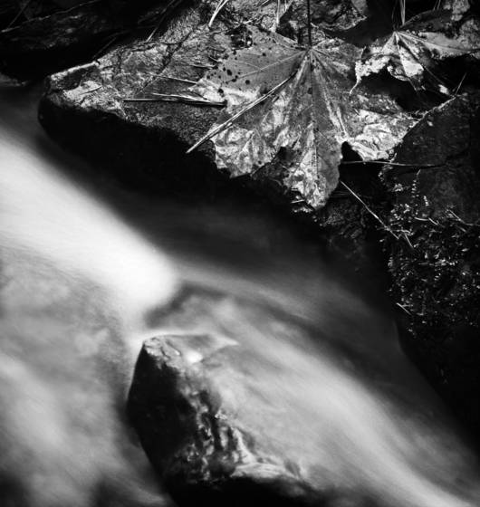 The_stream_flows_and_leaves_and_needles_fall