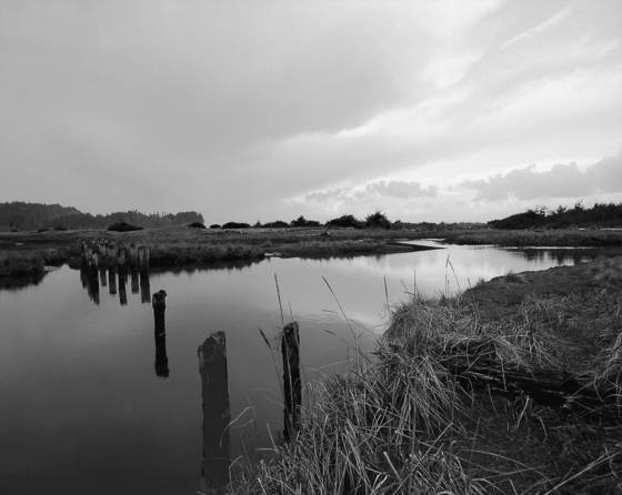 Salt_creek_estuary